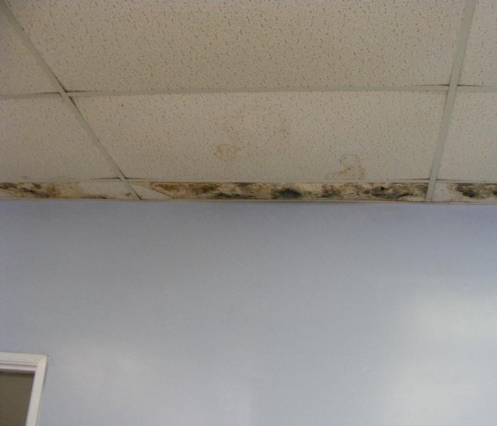 Mold Remediation Commercial